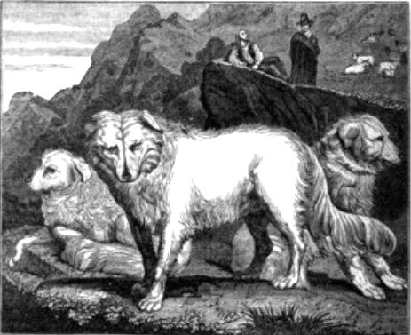 Pastore storia 1